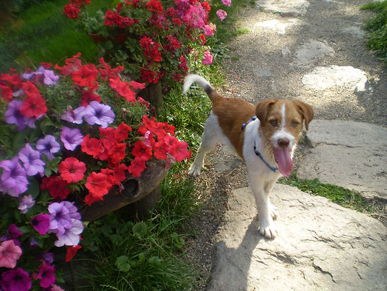 Romania_Animal_Rescue_About_Us_Scotty_Sa