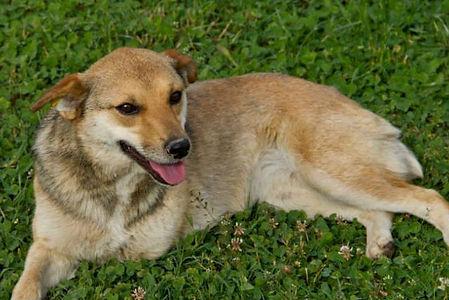 -Romania Animla Rescue _ Animal Spay Neu