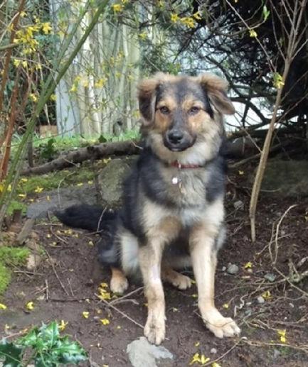 Romania_Animal_Rescue_About_Us_Roxie_Sav
