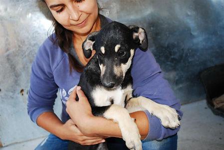 Romania Animla Rescue _ Animal Spay Neut