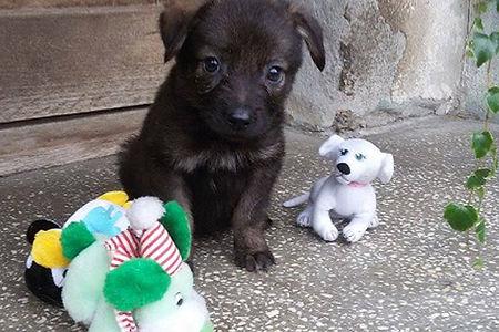 Pet_Adoption_Friends for Life.jpg