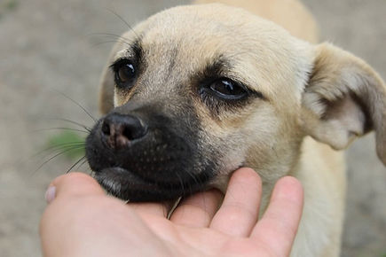 Romania_Animal_Rescue_Center_Of_Hope_Han