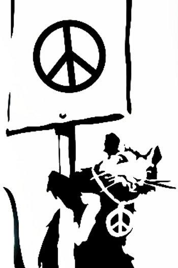 Rata pacifista