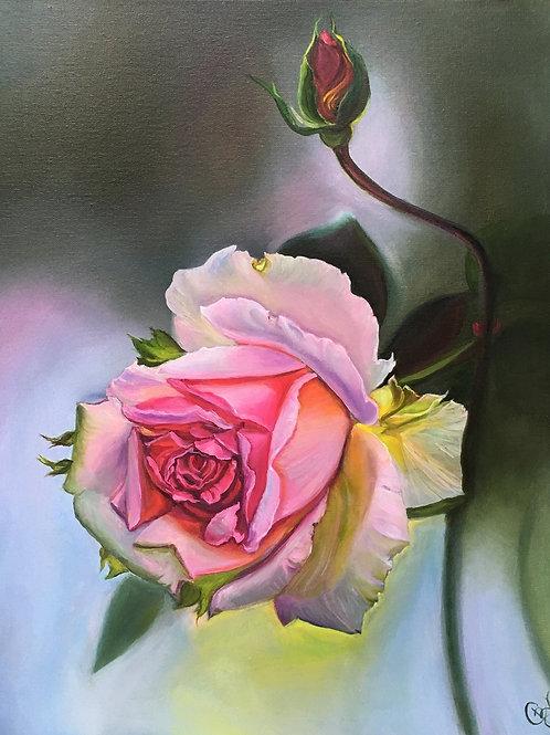 PINK ROSE 40 x 50 cm