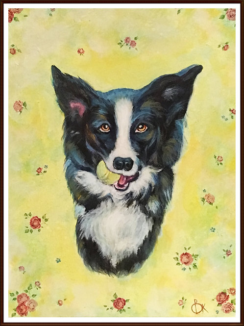 Border collie portrait £15.00-£48.00