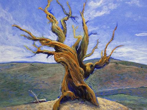 The old tree 38 x 46 cm