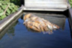 Barn Owl Dead Water Trough 6.jpg