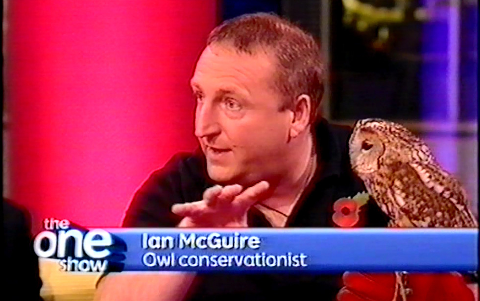 Talking tawny owls on The ONE Show