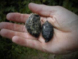 Barn Owl Pellet 1.wildowl.co.uk.jpg