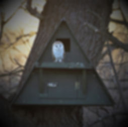 Barn Owl Nest Box & Owl 14475.jpg