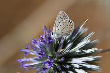 Fleur en éclosion, surplombée d'un papillon