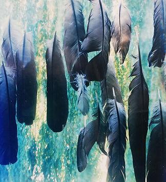feathers.jpg