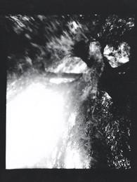 Weeping willow / Salix alba crysocoma 'tristis'