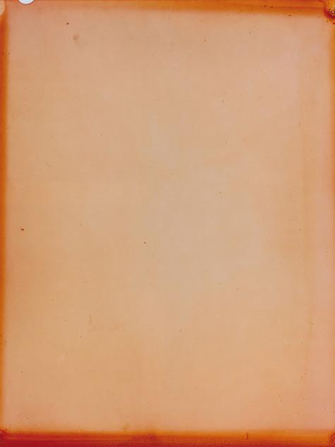 Salix alba crysocoma €˜'tristis'