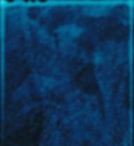 Polystichum aculeatum.jpg