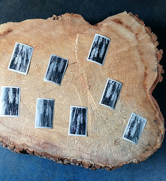 Postcards of Salix alba crysocoma 'tristis' .jpg