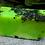 Thumbnail: Jamaican Cerasee Soap - All Natural Organic Vegan Soft Skin