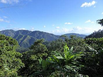 Jamaica blue mountain.jpg