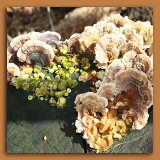 Herbst Baumpilze.jpg