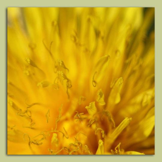 Frühling_Löwenzahn2.jpg