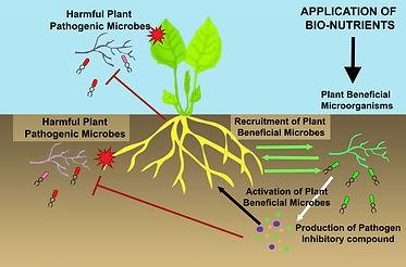 exalt bio-farming image