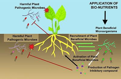 bio-farming explained
