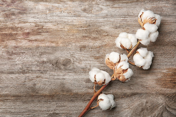 Cotton flowers on wooden background.jpg