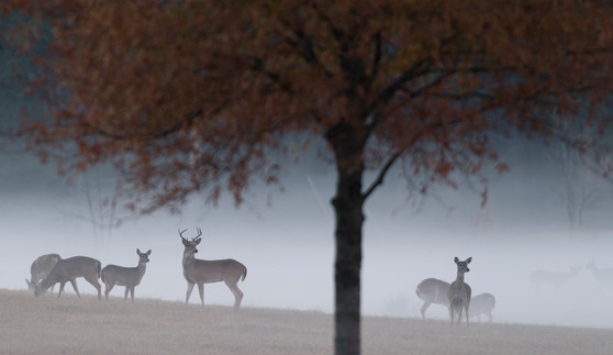 Copy of G2522 Deer Fog bs5.JPG