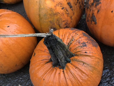 Pumpkin Custard Tart Recipe (super easy)