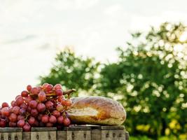 grape-01 (1).jpeg