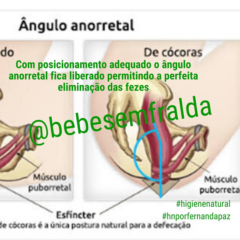 imagem interna do ângulo anorretal com o corpo de cócoras