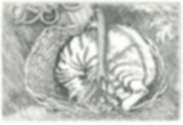 An original etching of a cat called Basil