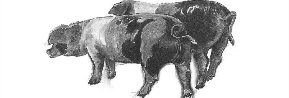 A Giclée print of two pigs