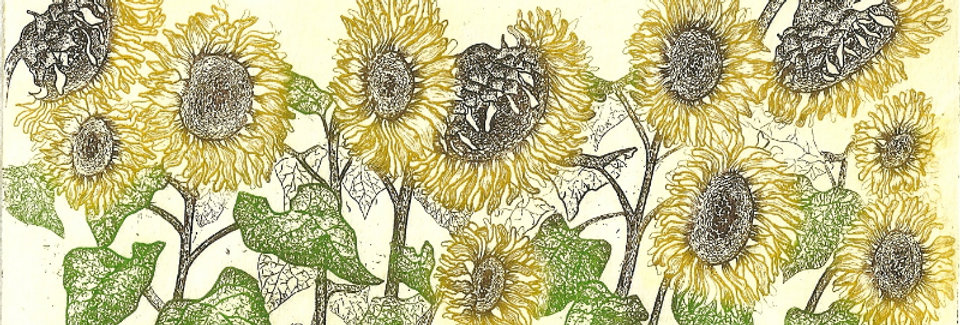 Coloured etching of sunflowers
