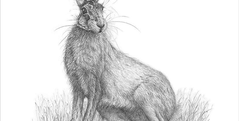 A Giclée  print of a Hare