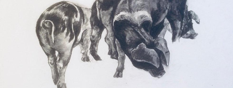 Three Pigs