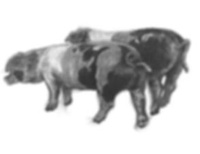 A giclee print from an original drawing of two pigs