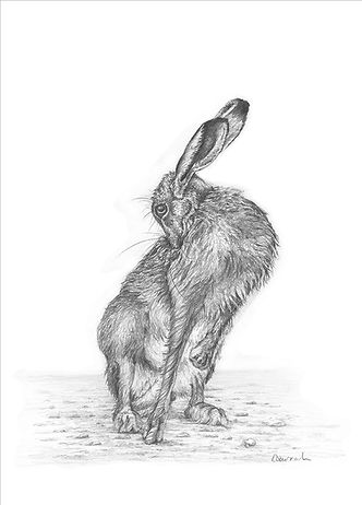 A limited edition giclee print from an original drawing