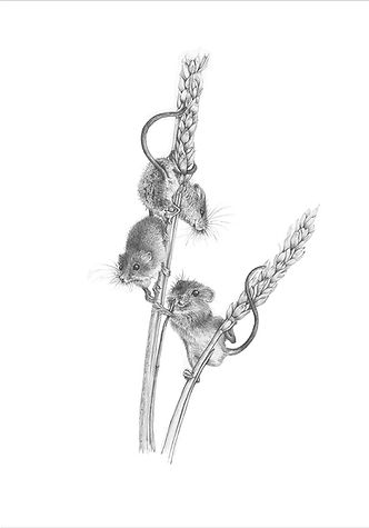 A limited edition giclee print from an original drawing of harvest mice