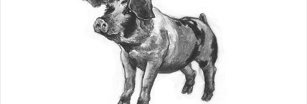 Giclée print of a pig