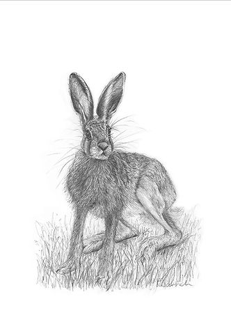 A limited edition giclee print of an oroginal drawing of a leveret