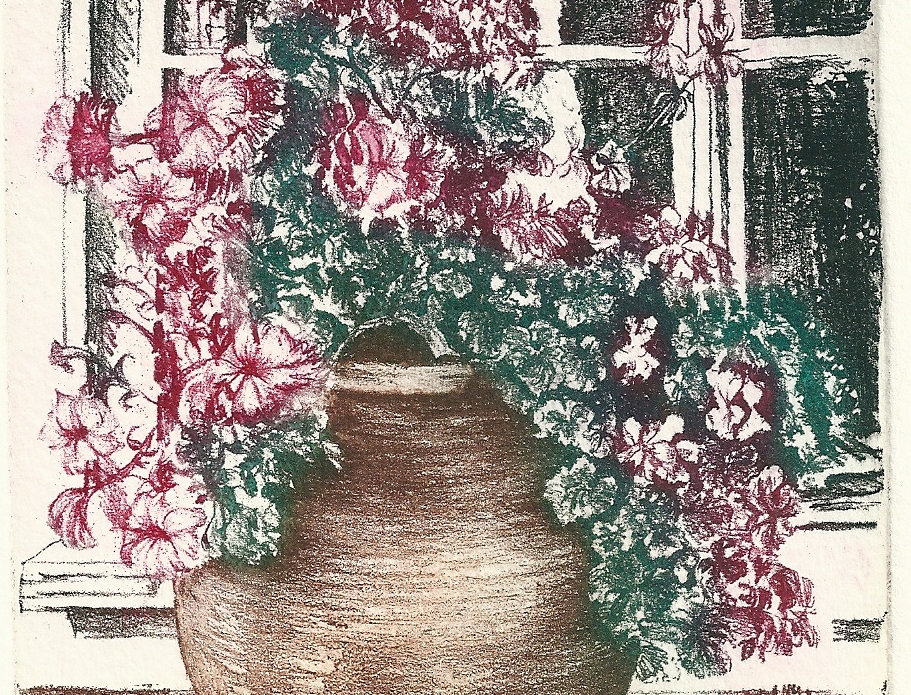 An etching of a pot filled with a flowering zonal geranium