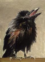 Little Calling Crow