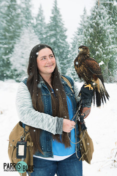 Phoenix the Hawk