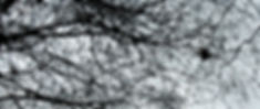 Wix SNARED DSC_0048-6-Edit-2_edited.jpg