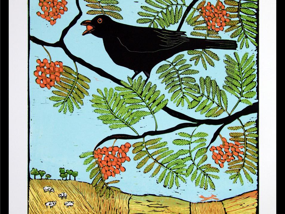 Blackbird and Rowan