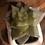 Thumbnail: Groovy Retro Van Faux Succulent Planter