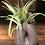 Thumbnail: Hand Painted Sloth Faux Succulent Planter