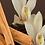 Thumbnail: Cinnamon Vanilla
