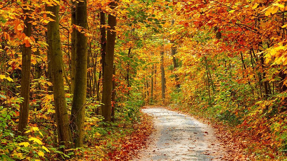 Fall Leaves 24oz.